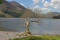 Buttermere, view of lake and fells Stock Photography