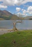 Buttermere, vista del lago ed abbatte Immagini Stock Libere da Diritti