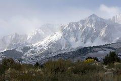Buttermilch im Schnee Stockfoto