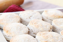 Buttermilk Biscuits Stock Photo