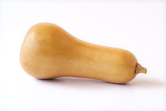 butternut obraz stock