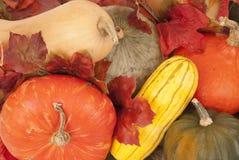 Butternut, gland et autre courge de chute très colorée Photos stock