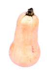 Butternut pumpkin on white Stock Image