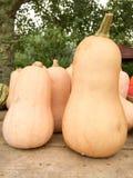 Butternut pumpkin Stock Photos