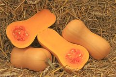 Butternut pumpkins Royalty Free Stock Image
