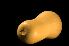 Butternut squash. A large whole butternut squash isolated against a black background Royalty Free Stock Photo