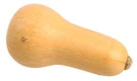 Free Butternut Squash Stock Photography - 22589142