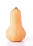 butternut squash Royalty Free Stock Photos