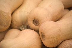 Butternut Squash. Close up view of several butternut squash stacked on top of each other Royalty Free Stock Image
