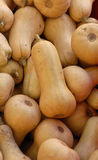 Butternut Squash. Many Butternut squash for sale at an outdoor farmers market Royalty Free Stock Images
