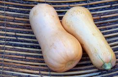Butternut Squash in Basket. The butternut squash is another extremely popular squash in Southern Africa and with its tasty soft yellow inner flesh is a perfect Royalty Free Stock Photography