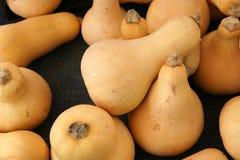 Butternut squash, Butternut pumpkin Stock Photo