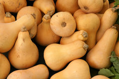Butternut squash, Butternut pumpkin Royalty Free Stock Photos