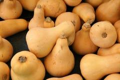 Butternut squash, Butternut pumpkin Stock Image