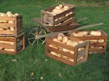 Butternut squash in crates stock photos