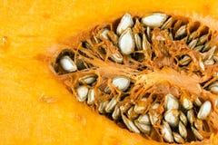 Butternut squash (Cucurbita moschata) Royalty Free Stock Image