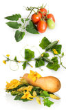 Butternut squash with green leaves and huge flowers Stock Images