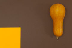 Butternut squash isolated on brown and orange split background Stock Photos