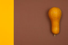 Butternut squash isolated on brown and yellow split background. With copy space Stock Photography