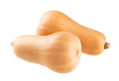 Butternut squash isolated on a white background Stock Images