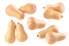 Butternut squash isolated on white background Stock Photography