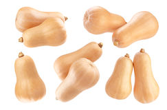 Butternut squash isolated on white background Royalty Free Stock Images