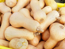 Butternut Squash Stock Images