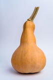 Butternut squash (pumpkin) on white background. Butternut squash or pumpkin on white background Royalty Free Stock Images