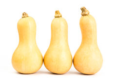 Butternut squash Royalty Free Stock Photography