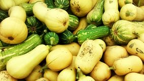 Butternut squashes in the sun Royalty Free Stock Image