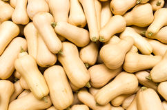 Butternut or winter squash on display Stock Photo