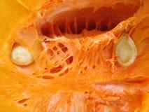 Butternutpompoen Stock Foto