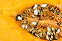 Butternutsquash (Cucurbitamoschataen) Royaltyfri Bild