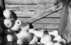 buttersquash κλουβί Στοκ φωτογραφία με δικαίωμα ελεύθερης χρήσης