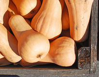 Buttersquash. Image of a crate filled with buttersquash being sold at a market Stock Image