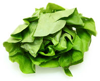 Buttery Lettuce Head Royalty Free Stock Images