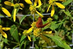 Butteryfly op bloem in de zomer Royalty-vrije Stock Foto's