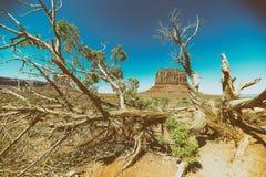 Buttes en vallée de monument derrière un tronc d'arbre, Etats-Unis Photos stock