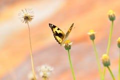 Buttetfly Lizenzfreies Stockbild