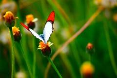 Buttetfly Lizenzfreie Stockfotos