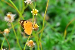 Buttetfly Lizenzfreies Stockfoto