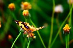 Buttetfly Lizenzfreie Stockbilder