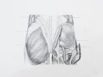 Buttocks muscles pencil drawing. Detail of buttocks muscles pencil drawing on white paper Stock Photo