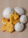 Button and Chanterelle mushrooms Stock Photography