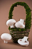 Button mushroom. Close up of button mushrooms in green grass basket Stock Photography