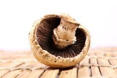 Button mushroom Stock Images