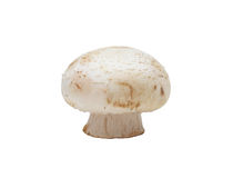 Button Mushroom, isolated Royalty Free Stock Photos