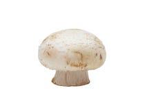 Button Mushroom, isolated Royalty Free Stock Photos