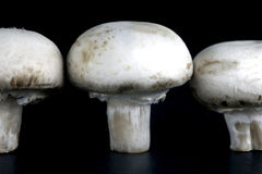 Button Mushrooms Royalty Free Stock Photos