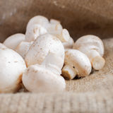 Button mushrooms Stock Images